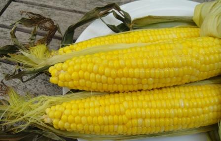 news-marketcorn-1.jpg